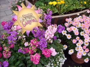 キレイなお花が咲誇ってました!