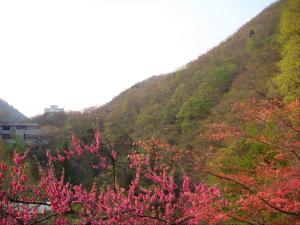 まだ新緑が始まったばかりの山々‥春の息吹を感じます