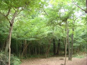 naraharaの森